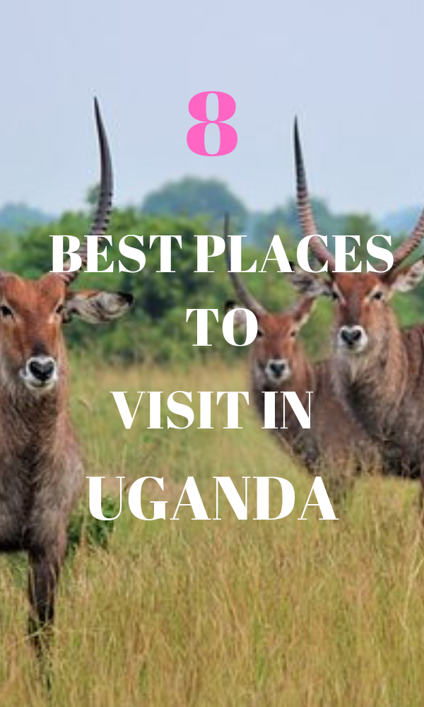 THE BEST PLACES TO VISIT IN UGANDA