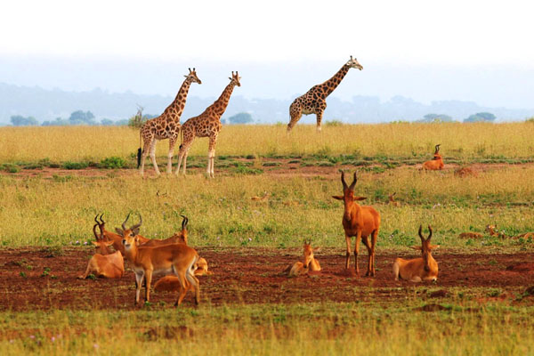 8 Best Places to visit in Uganda