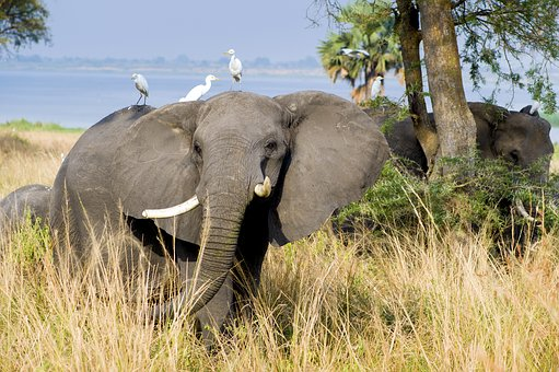 10 BEST AFRICAN COUNTRIES TO VISIT IN 2019 (AFRICAN SAFARI)