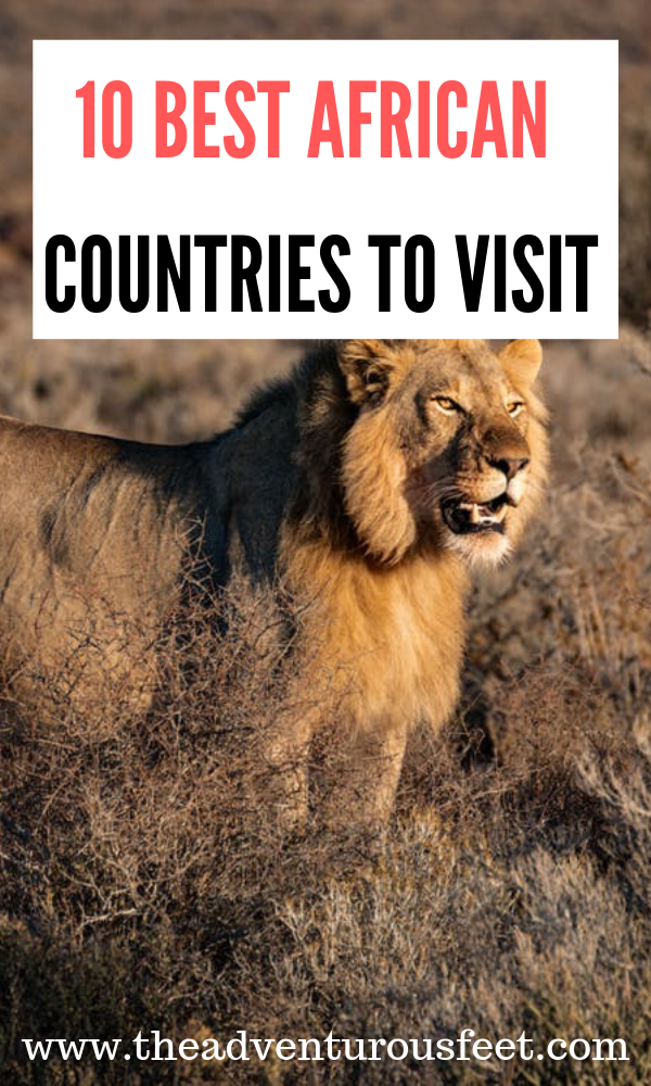 Want to go to Africa but not sure where to go? Here are the best African countries to visit for an amazing African safari. |Africa bucketlist |must visit countries in Africa #countriestovisitinafrica #bestafricancountriestovisitinafrica