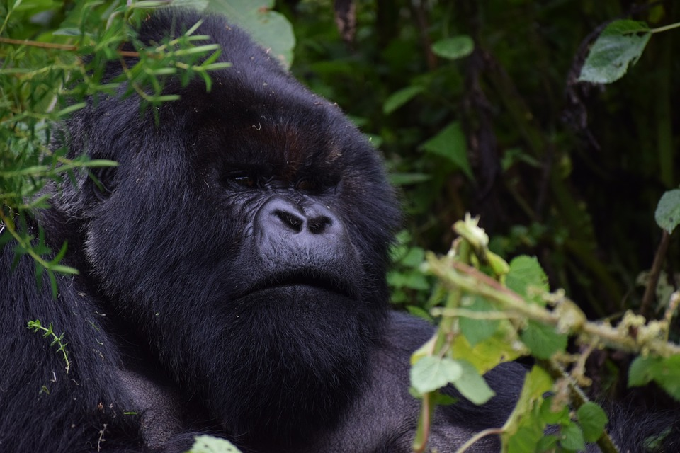 5 THINGS TO KNOW BEFORE TRAVELING TO UGANDA