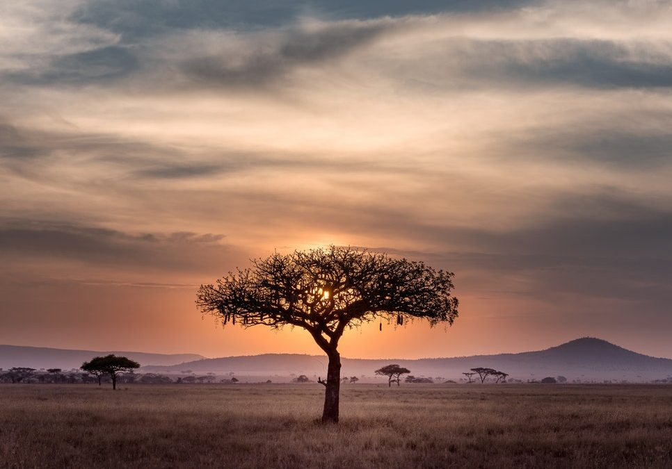 here is the list of the safest countries in Africa to visit