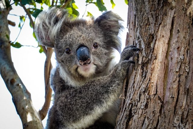 Wondering what to see in Australia? Get not enjoy its wildlife by visiting the kangaroos