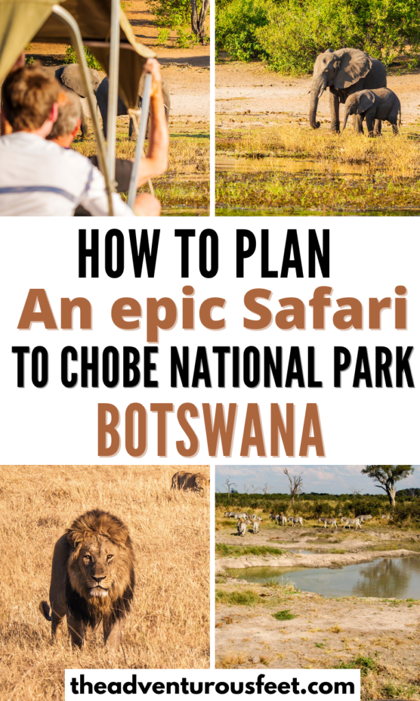 Planning to go for a safari in Chobe National park? Here is the complete guide with everything you need to plan your visit to Chobe national Park in Botswana. |chobe national park safari| chobe national park travel guide |best time to visiting chobe National park| how to get to chobe national park| Accommodation in Chobe national park|  how to plan a trip to chobe national park| tips for visiting chobe national park| safari tips for chobe national park| chobe national park animals| chobe national park camping| activities at chobe national park