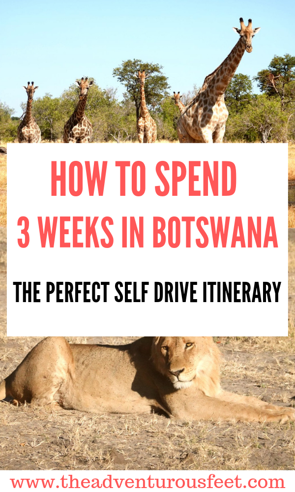 Wondering how to spend 3 weeks in Botswana? Here is the perfect Botswana itinerary to guide you. #selfdrivesafaribotswana #selfdrivesafari #selfdrivebotswana #botswanaroadtrip #botswanasafariselfdrive