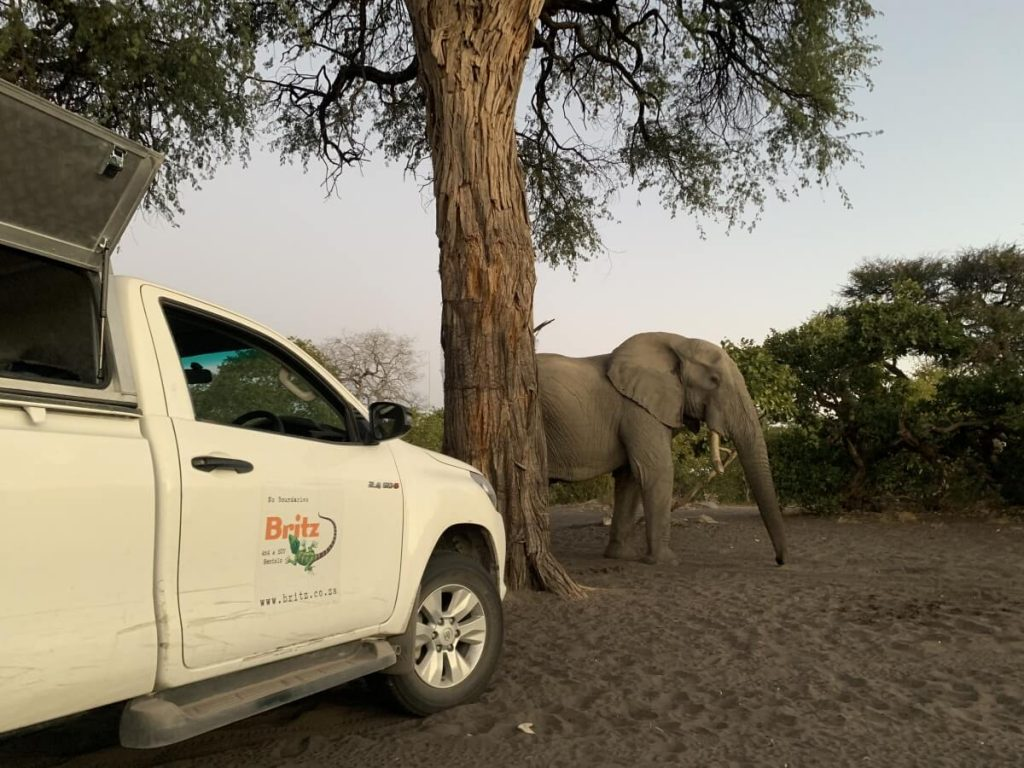 Elephant at Savuti campsite