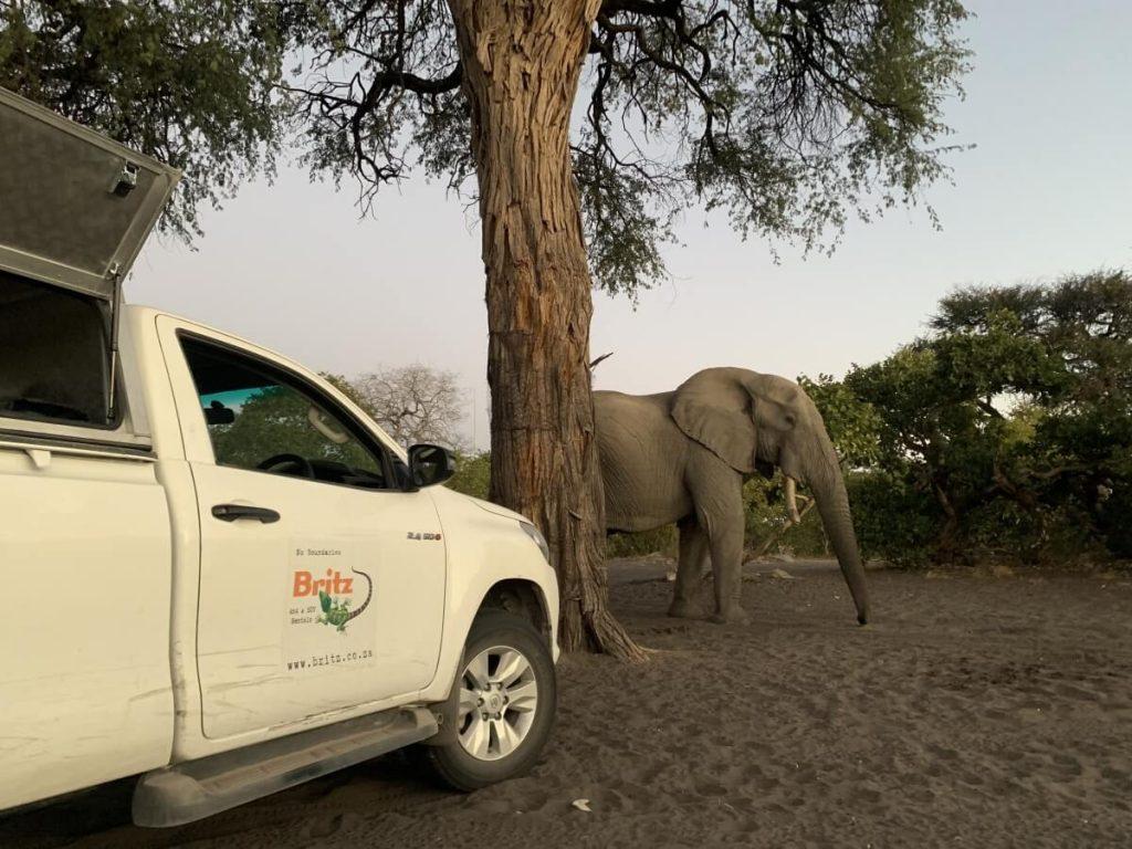 Elephant at Savuti campsite