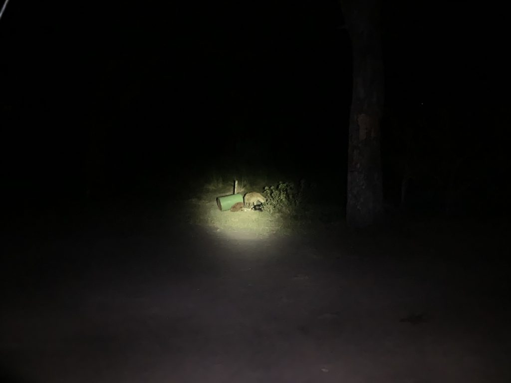 It was dark but if you look closely, you'll be able to see a hyena at the campsite
