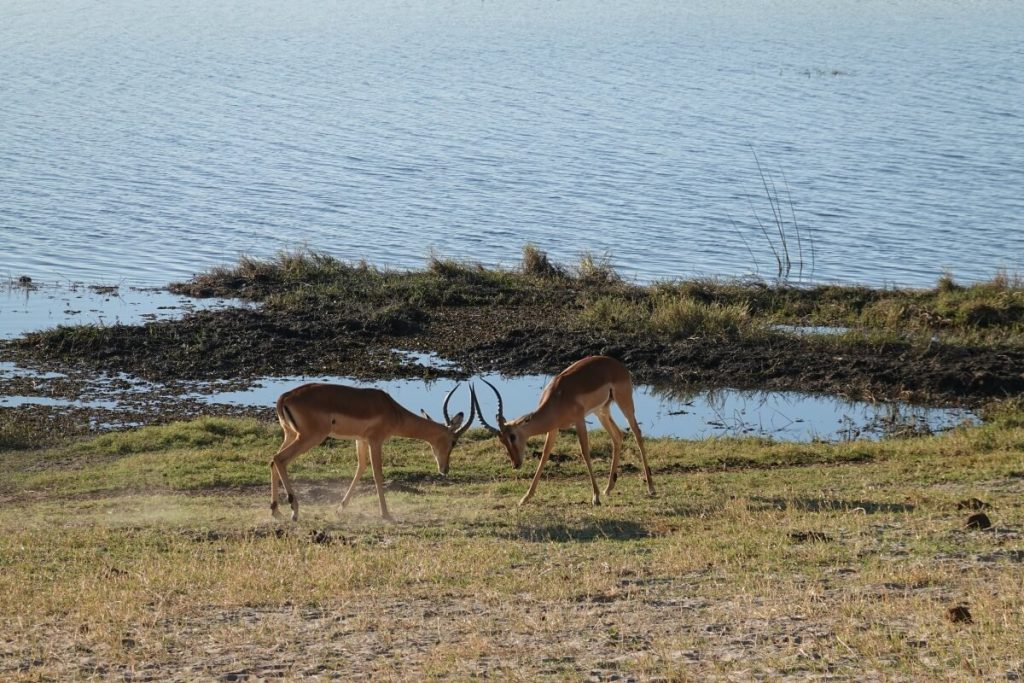 What to see at chobe national park