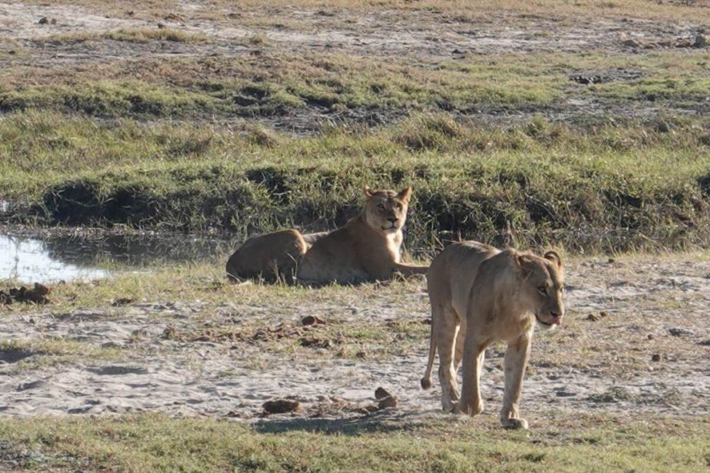 wilderness safaris botswana