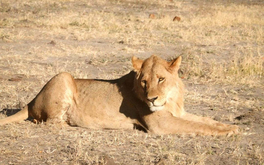 chobe national park should be added to your Botswana self drive Itinerary to see the best wildlife