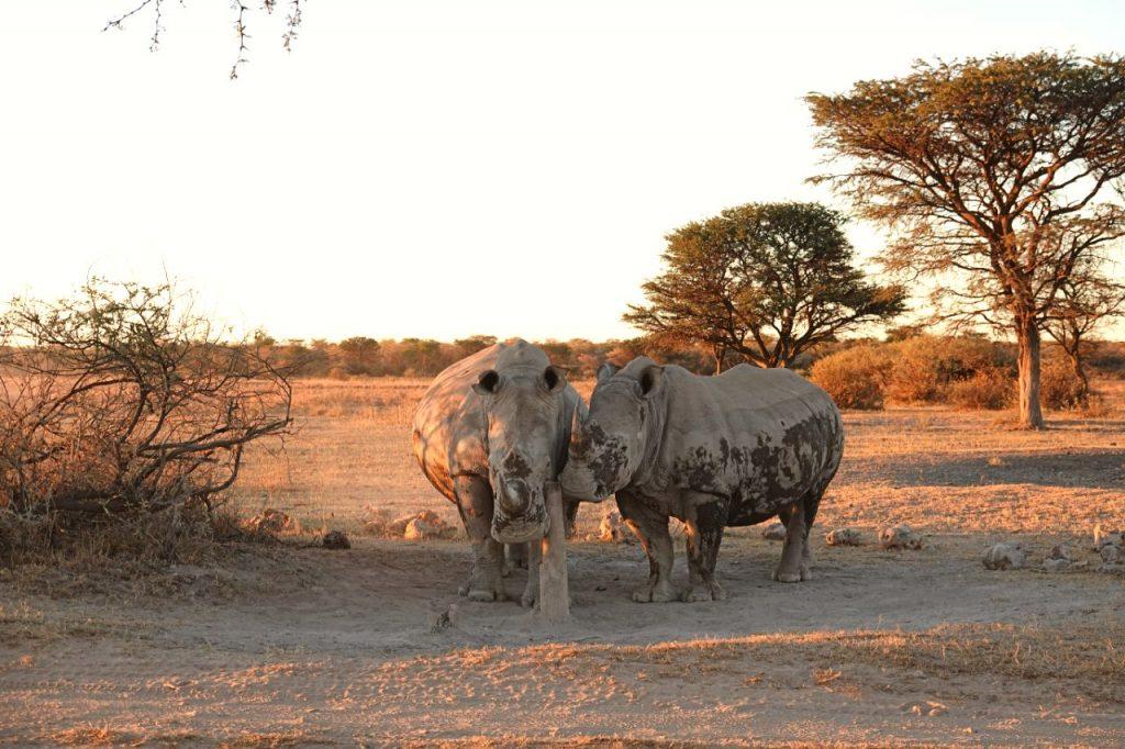 visit khama rhino sanctuary