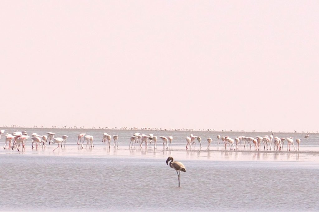 nata bird sanctuary is one of the places to visit in botswana