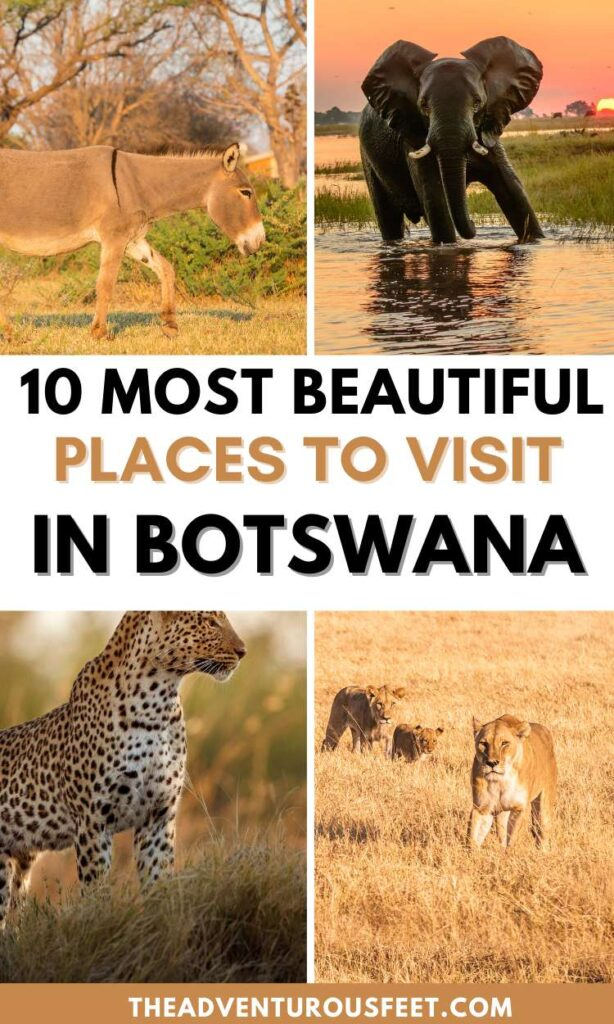 Traveling to Botswana? Here are the best places not to miss. | Best places to visit in Botswana | Botswana travel places | Botswana safari | things to do in Botswana | What to do in Botswana | top tourist attractions in Botswana | Botswana self-drive places to visit | Botswana travel things to do in Botswana Botswana wildlife |what to do in Botswana |Okavango delta |botswana safari |national parks in Botswana