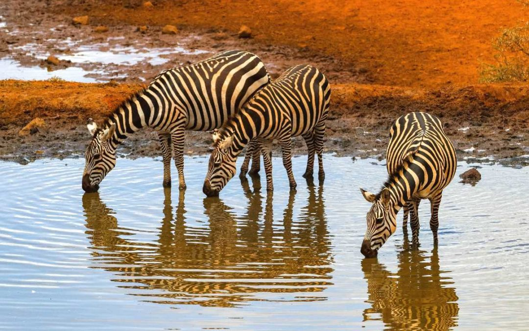 The best national parks in Africa for an ultimate African safari