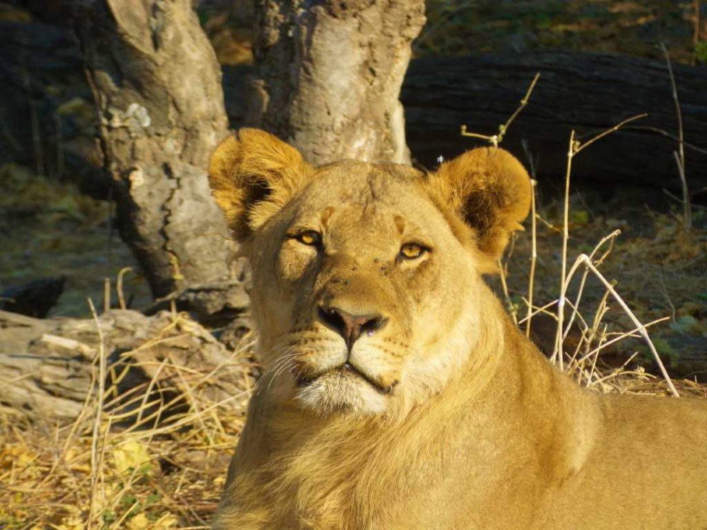 chobe national park- is one of the best safari parks in Africa
