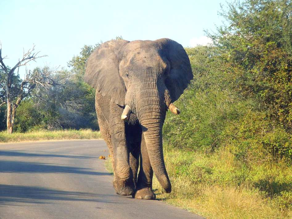 Kruger national park - best national parks in africa