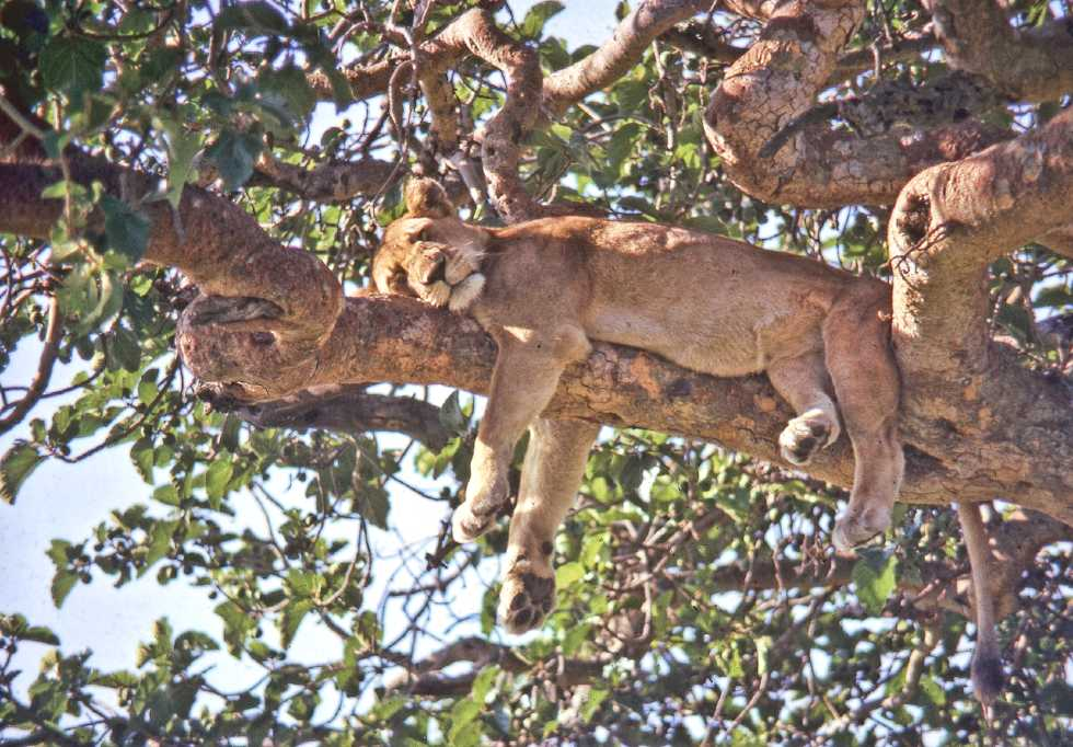 queen elizabeth national park - africa wildlife safaris