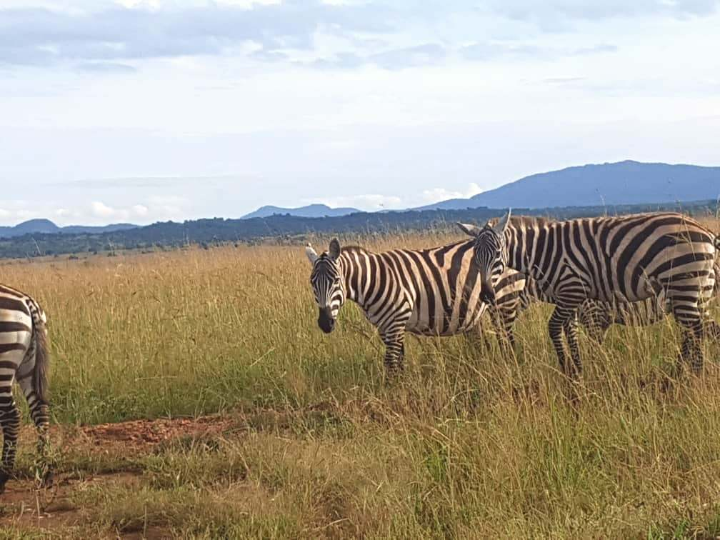 best tourist attractions in uganda