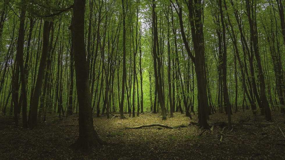 fontainebleau castle forest