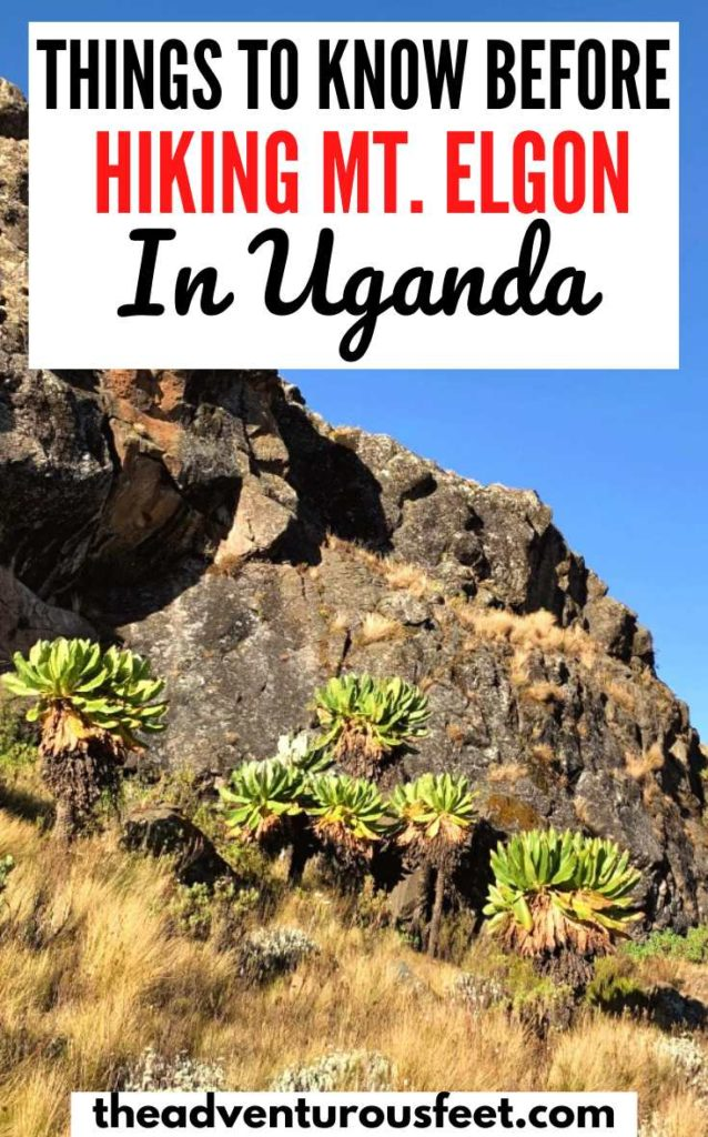 Planning on climbing Mount Elgon in Uganda? Here is everything you need to know before you go. | A complete guide to climbing Mt Elgon |Tips for hiking Mt. Elgon | Best time to hike Mount Elgon | How much does it cost to climb Mount Elgon | Packing list for Mt. Elgon | how to visit Mount Elgon National park. #MountElgonnationalpark #climbingmountelgoninuganda #theadventurousfeet