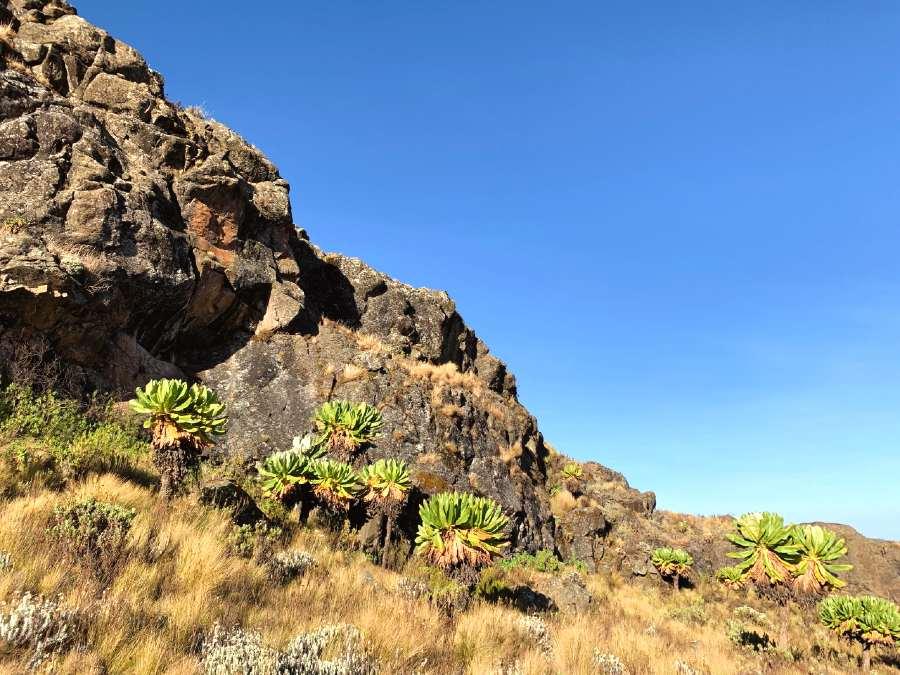 elgon mountain