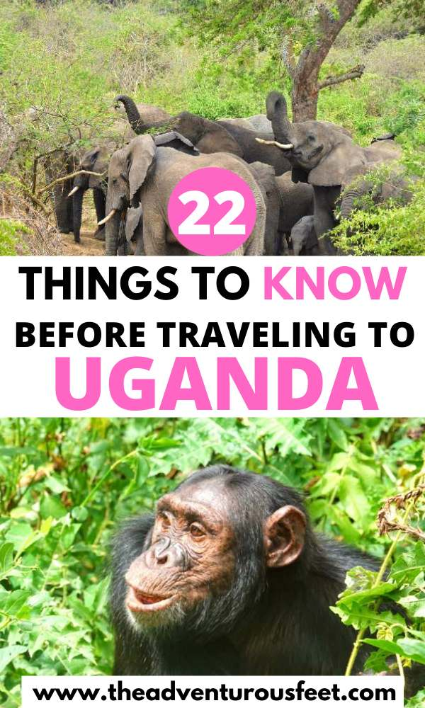 Traveling to Uganda? Here is everything you need to know before you go.| uganda travel tips | things to know before traveling to uganda| best time to travel to uganda | travel tips to uganda | vaccinations needed for uganda | tipping in uganda | uganda tourist guide | uganda travel guide| travel guide to uganda | traveling to uganda tips |is uganda safe| traveling in uganda tips #tipsforvisitinguganda #ugndatraveltips #travelguidetouganda #thedventurousfeet