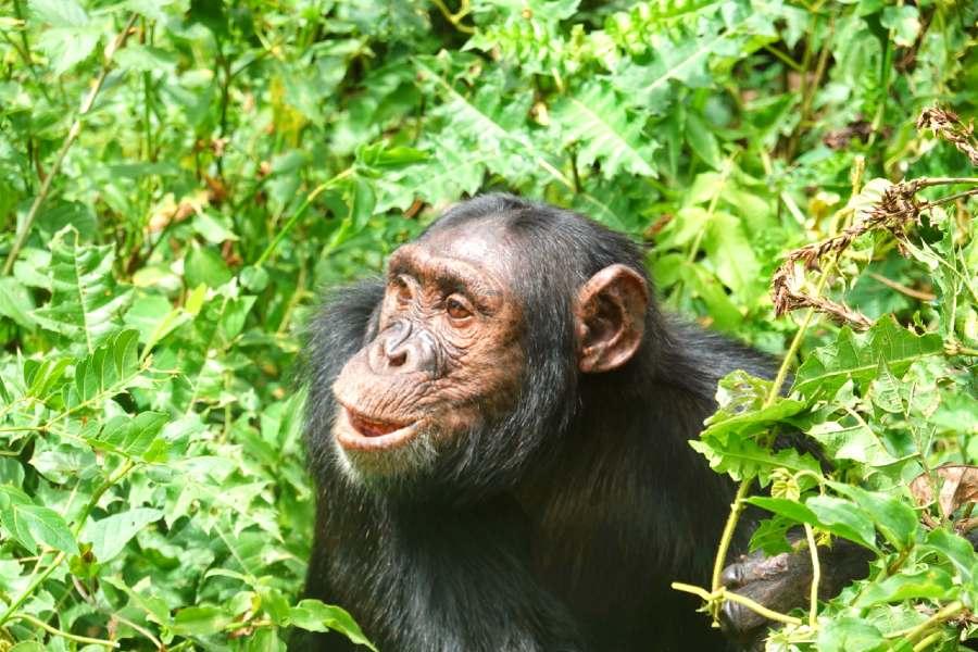 travel guide to uganda