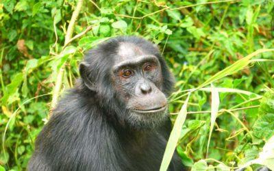 Uganda travel tips: 22 Things to know before traveling to Uganda