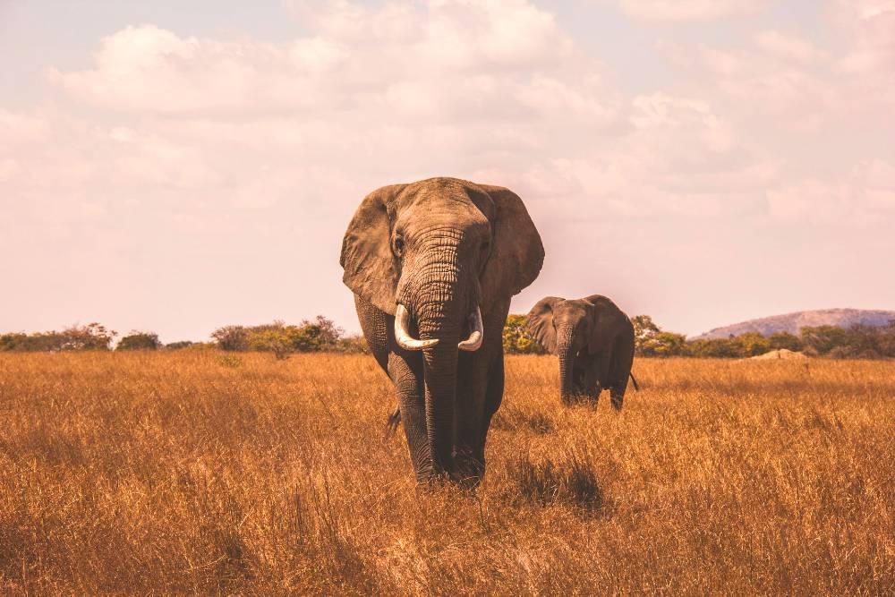amazing wildlife in Africa (