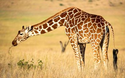 African safari tips: 20 things to know before going on your first safari in Africa