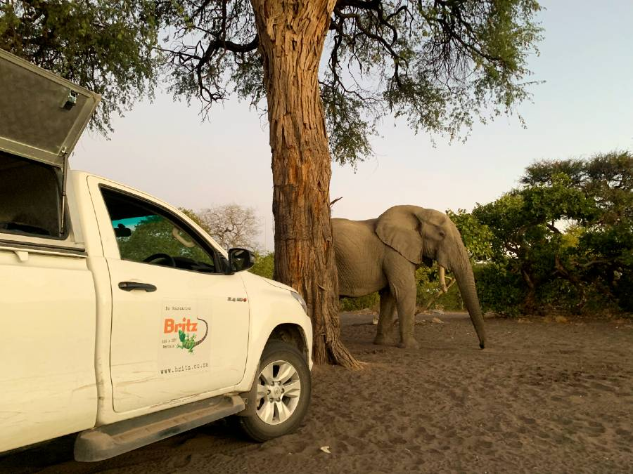 african safari tips