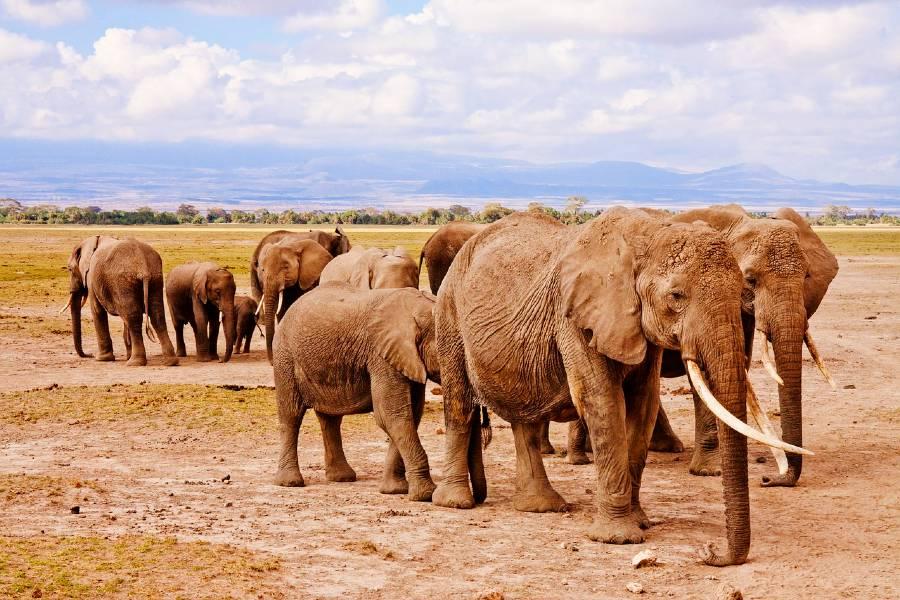 safari tips for Africa