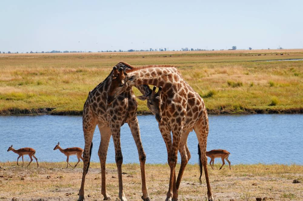 things to know before going on an african safari
