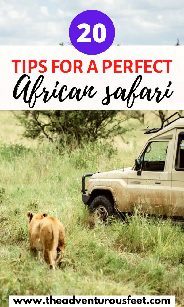 Planning to go for an African safari? Here is everything you need to know| things to know before going on a safari | African safari tips for first timers| tips for an African safari|what to know before going on a safari| safari tips for Africa| what to do on a safari| what not to do on an African safari| first time safari tips| hoe to prepare for an African safari #africansafaritips #tipsforafirstsafariinafrica #theadventurousfeet #africansafari