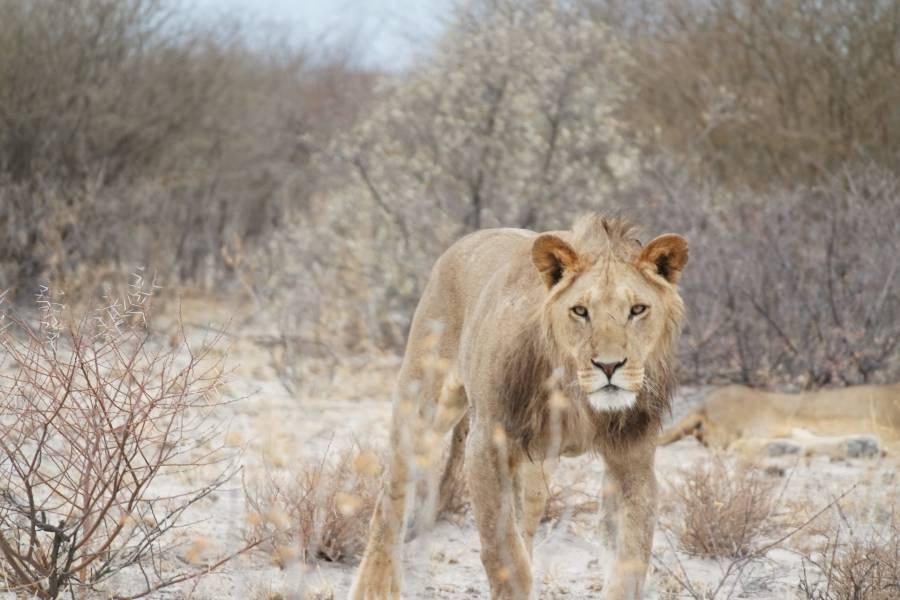 game reserve botswana