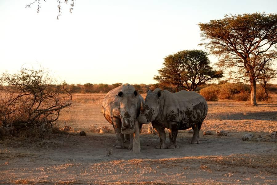 national parks botswana