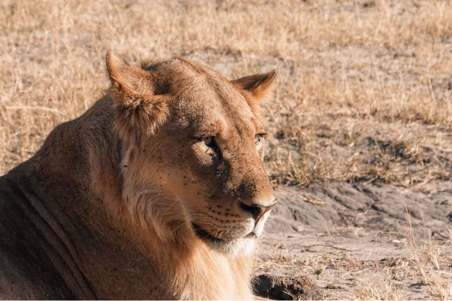 best Botswana national reserves